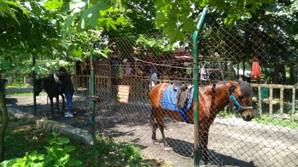 Cansu Alabalık At Biniciliği