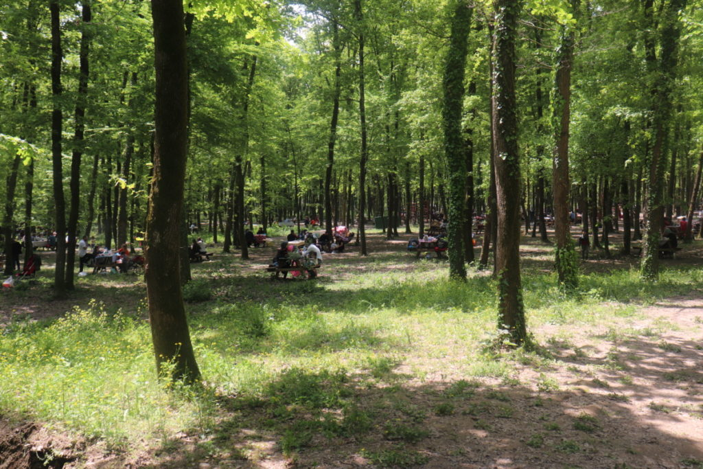 Ormanya Mesire Alanı