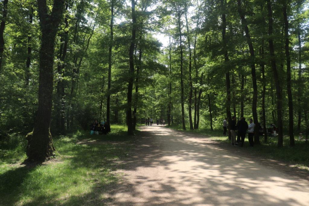 Yürüyüş Parkuru