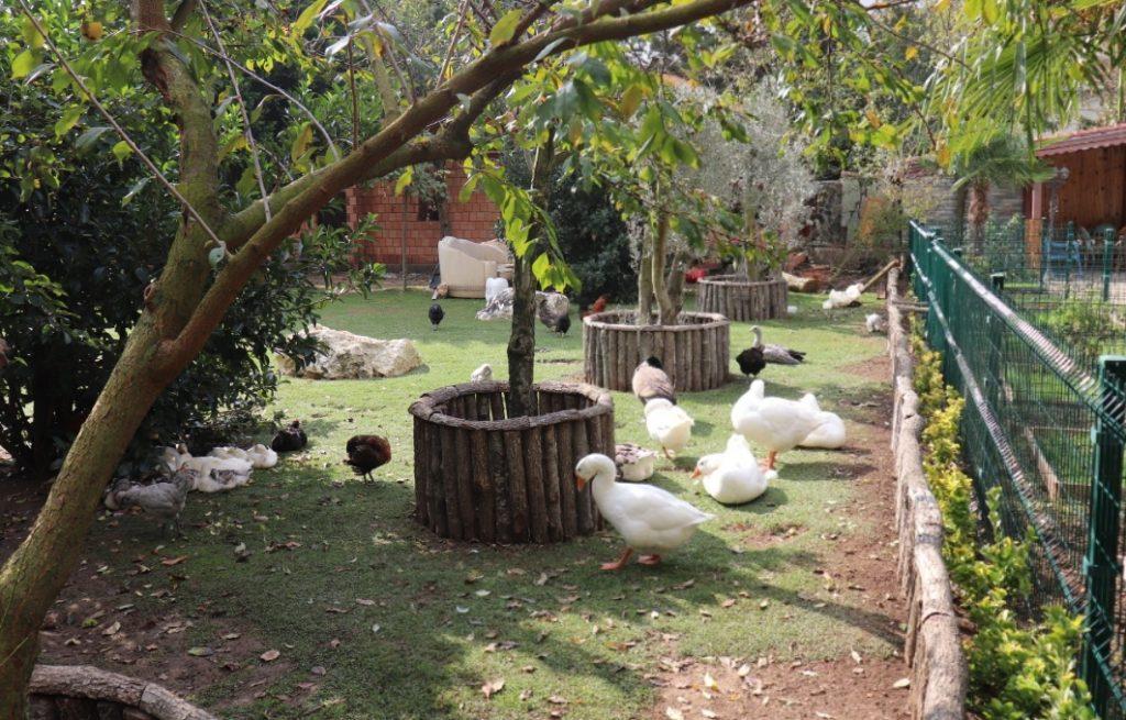 FlamingoKöy Hayvanlar