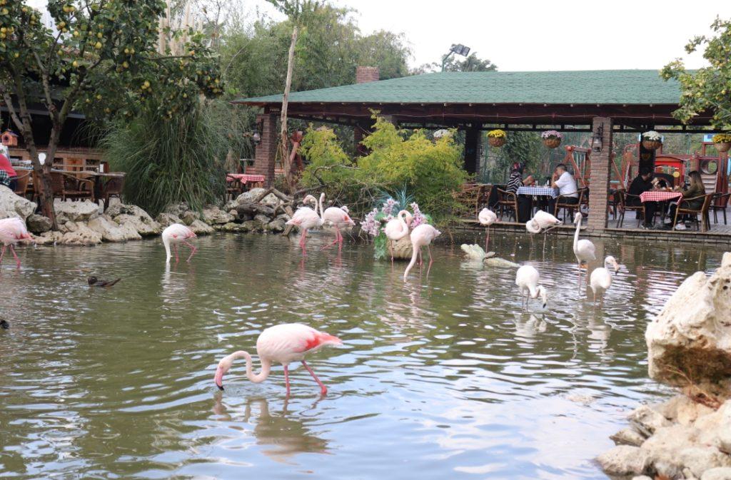 FlamingoKöy Kahvaltı
