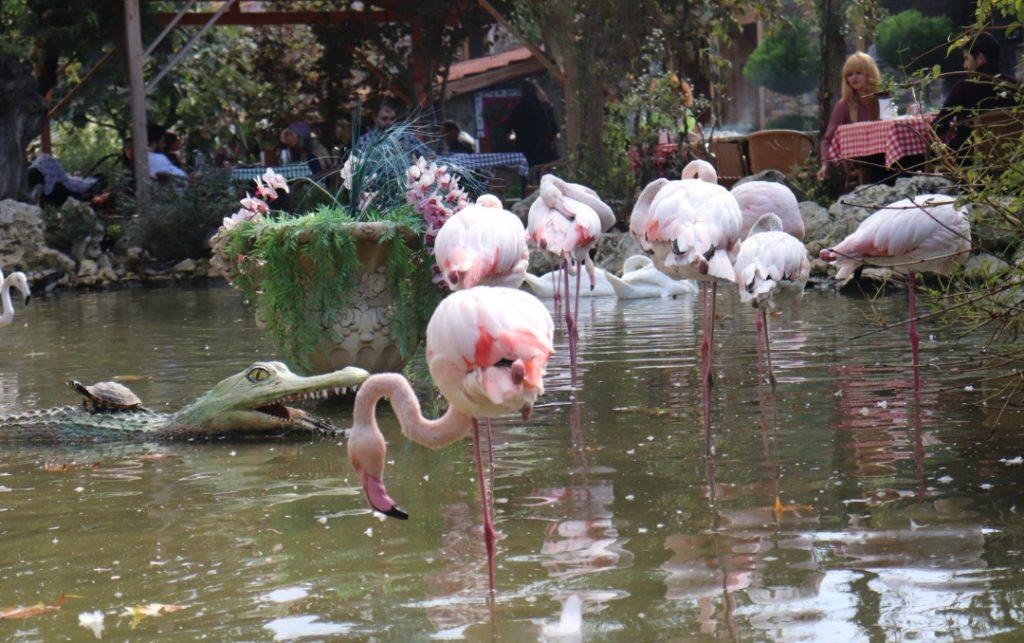 FlamingoKöy